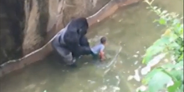 Loading No charges have been laid against the mother of a boy who fell into a gorilla enclosure.