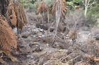 Vent erupts at Waimangu