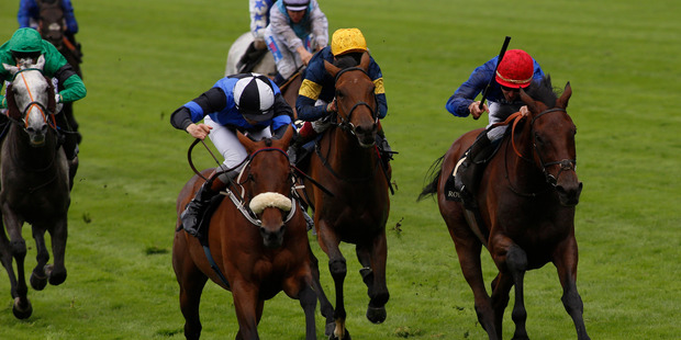 James McDonald (left, blue cap) has some work to do before storming home for second on Qewy behind Jennies Jewel in the Ascot Stakes. Photo / Getty Images