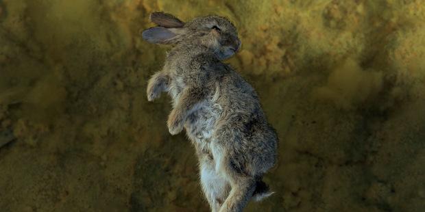 Nigel Swinn's The Rabbit in The Water.