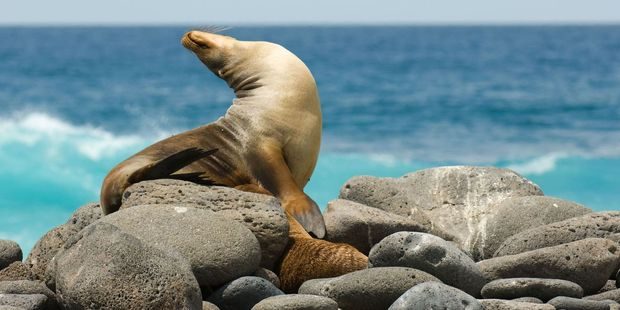 Discover the wildlife in the Galapagos. Photo / 123RF