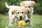 Say goodbye to your wheaten, cinnamon or chocolate coloured pooch and hello to the more prosaic