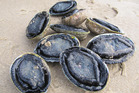 Six people have denied involvement in a black-market shellfish ring.