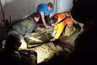 DIG: Ohope firefighters dug through concrete to free a trapped dog. PHOTO/SUPPLIED