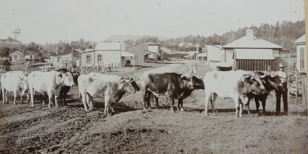 The Burlings bullock team working at Pongaroa, with Bill Brannigan the driver. In the background are the roads to Akitio and Pahiatua, and the hotel and school.