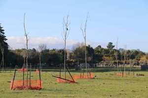 Failed fencing around trees planted by the Masterton District Council.