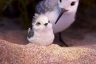 A scene from Pixar's animated short 'Piper'. Photo / Disney-Pixar