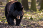 The woman was attacked by a adult female bear while participating in a marathon event on the Valles Caldera National Preserve. Photo / iStock
