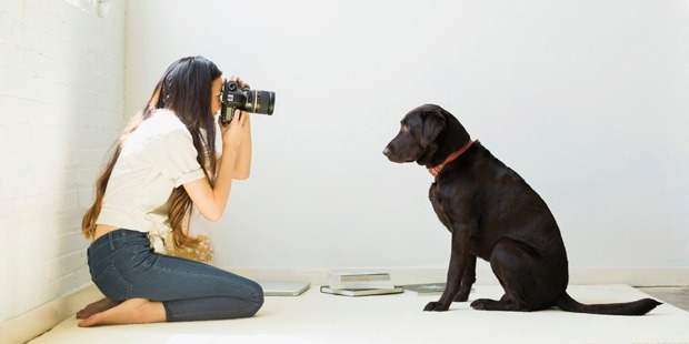 First it was cute kids, now pet pictures are taking over social media. Photo / Getty