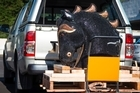 Customs and Police display a diamante-horse that contained cocaine worth an estimated street value of NZ$14 million at the Otahuhu police station. 2 July 2016. New Zealand Herald photograph by Jason Oxenham