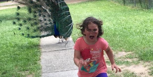 This image of a girl being chased by a peacock has started a new series of Photoshopped memes. Photo / Reddit