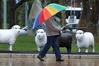 The umbrella's out and the sheep are smiling, as town meets country during the rain in central Hastings yesterday. Photo / Duncan Brown