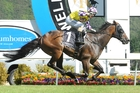 Vinnie Colgan will again be aboard Sacred Star on the Sunshine Coast tomorrow. Photo / Race Images