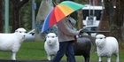 Watch: Brollies parade in Hastings CBD