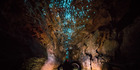 Ruakuri glowworms at Waitomo Caves. Photo / Supplied