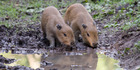 Zoo flooded with names for feisty pups