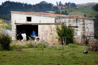 A cow shed was a wayward couple's refuge for a night. But their time on the run was running out. PHOTO/FILE