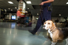 In 2015, Customs dogs found more than $3.7 million in cash. Photo / Michael Craig