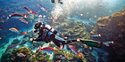 The Great Barrier Reef offers some of the world's best scuba diving. Photo / Tourism and Events Queensland