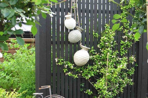 BACKDROP: Your garden can provide a background for your style. Photo/supplied