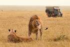 The number of species slipping towards the endangered list is of woeful concern to safari tourism. Photo / iStock