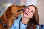 Dogs can cause sepsis in humans just by licking them, doctors have warned. Photo / iStock