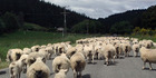 Brexit: 'A messy divorce' says Southland farmer