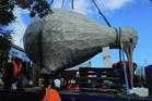 The Tararua Alliance team prepare to lift the kiwi on to its new perch. Photo / Deb Lee