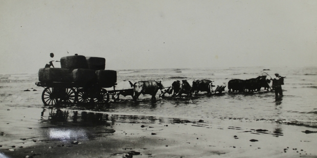 Walter Plowman stands on the back of the bullock wagon at Akitio Beach as wool bales are moved to the row boat before being loaded on to a coastal steamer in the 1920s.
