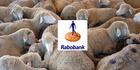 Rabobank's George Murdoch's Sheep Industry Award update