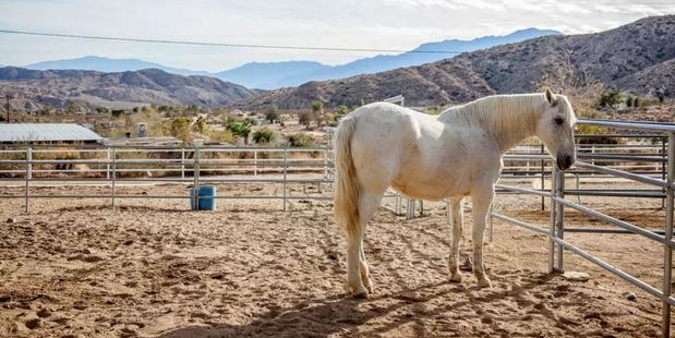Crazy Horse Ranch Carriage House in Morongo Valley is a rescue centre for horses primarily, but also cats and dogs. Photo / Airbnb