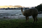Ingo Ratsdorf sent photos in taken during a frosty morning at Pukeatua Farmstay.