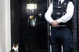 Larry the Downing Street cat sits on the steps of 10 Downing Street in London, after Britain's Prime Minister David Cameron left to face prime minister's questions for the last time. Photo / AP