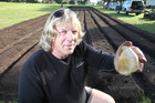 Karika Farms owner Karlos Millanta has swapped abseiling for garlic growing and is enjoying the lifestyle change. Photo / John Borren