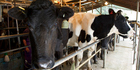 Debt levels have reached $39 billion, forcing dairy farmers to make some tough decisions.