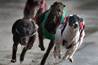 Greyhound authorities have announced racing would resume in NSW tomorrow under increased surveillance and more security at the tracks. Photo / Brett Phibbs