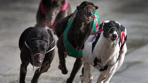 NSW Labor Awakens From Deep Slumber, Vows To Reverse Baird's Greyhound Ban