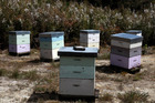 Theft of hives appears to be increasing in the Central Districts. Photo / File