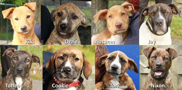 Whangarei SPCA is packed with gorgeous puppies and dog.