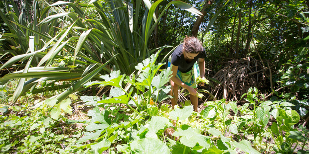 Laura Neureuter collects lettuce from the garden on the Otata Island. Photo / Michael Craig