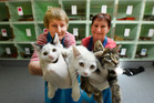 Raining Kittens: Volunteers Pamela McLaren and Jenny Gelissen hold kittens at Tauranga SPCA where kitten food supplies are low. Photo/George Novak.