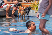 Tank (Golden dog) and his friend Echo (black dog) along with their owner Matt Holt, cool off with kids around the play area pool at Auckland's Wynyard Quarter. Photo / Steven McNicholl