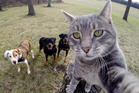 Manny the cat and his pals. Photo / Supplied