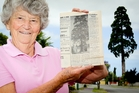 Bev Brown lives in Ngarimu Cres, Taradale, where the Californian redwood tree on the corner with Church Rd is being felled. Mrs Brown is pictured holding a photo published in the Taradale Times on June 15, 1972, of her late dad standing under the tree. Photo / Warren Buckland
