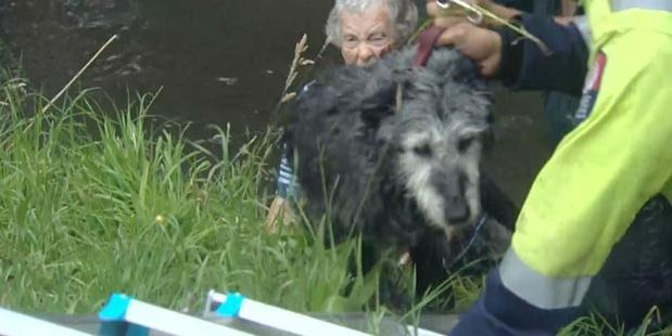 Loading Daphne Midgley was walking her dog on Ashgrove Terrace when it jumped in the river. Photo / Joe Morgan