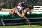 Wee Biskit defends her title in Saturday's Wellington Hurdles at Trentham. Photo / Royden Williams