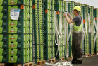 The last kiwifruit of the season are prepared for loading at the Port of Tauranga today before sailing in this file photo.