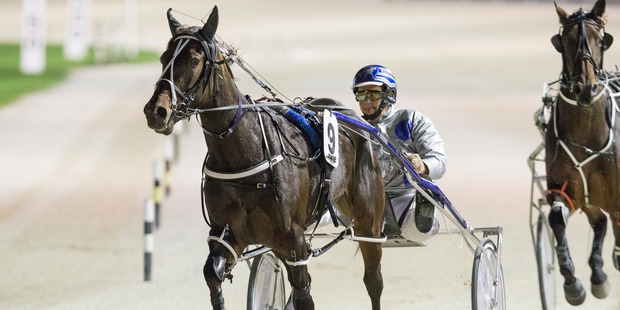 Barry Purdon trains and drives Arden's Choice in tonight's main pace. Photo / Greg Bowker