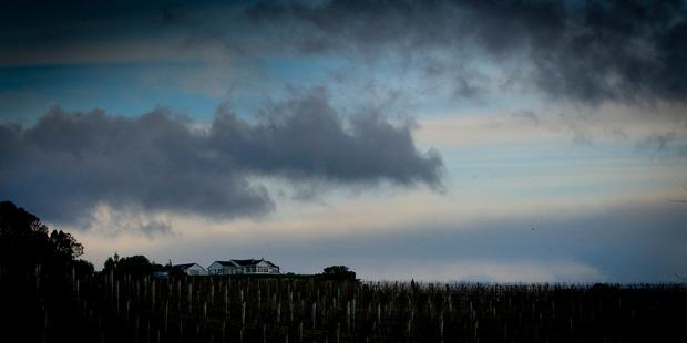 Stormy sky over vineyards at twilight, Havelock North. Photo / Warren Buckland.