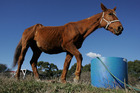 A horse was starved to death at a property in Levin. Note: This is not the horse. Photo / File